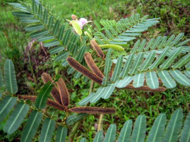 Malaysia Plants