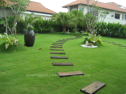Exceptional Carpet Grass Garden Design Malaysia   Taiwanese Grass ...